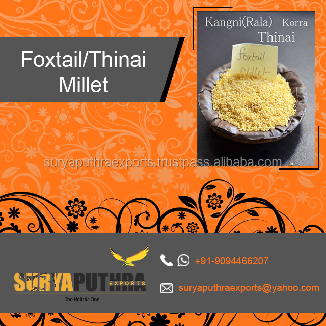 2017 New Crop High Quality Yellow Foxtail and thinai millet Organic