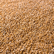 High quality wheat grain from Russia 2grade, 3grade, 4grade