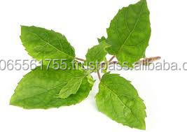gymnema sylvestre best product