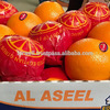 Super Hot selling fresh citrus fruits with low price