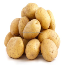 HAR Indian Fresh sale Potato