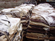 Premium Quality Donkey Hides, Cow hides, Cow head skin, Leather