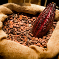 Cocoa Beans Dry Raw Natural Fino de Aroma Arriba from Ecuador, Worldwide Shipping