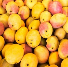 Fresh And Sweet Mangoes From Vietnam Sold At Good Market Price