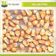 Animal Feed Yellow Corn Loose Seed for Bulk Sale at Best Price