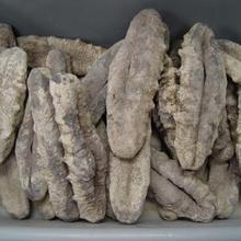 Wholesale dried sea cucumber buyers