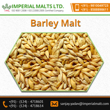 High Quality Raw Barley Available for Making Barley Malt/Barley Seed
