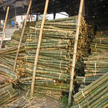high quality bamboo poles sale