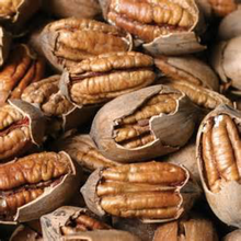 TOP GRADE RAW ORGANIC PECAN NUTS FOR SALE