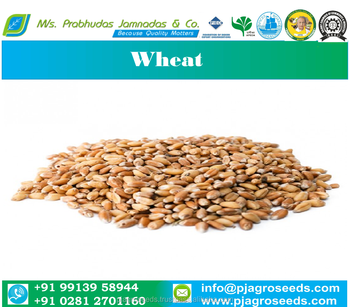 Feed Wheat Grade 3