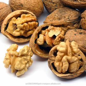 Wholesale Walnuts nuts Kernels and in Shell Organic Fresh from Ukraine