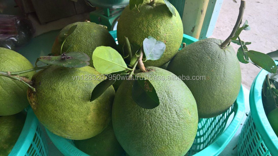 VIETNAM PREMIUM QUALITY FRESH GRAPEFRUIT - BEST PRICE