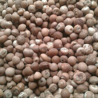 Fresh Dried Betel Nut Indonesia