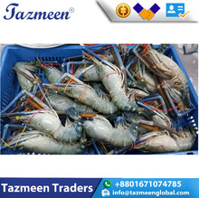 Best Quality Frozen SCAMPI Seafood Shrimp