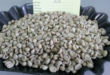 VIETNAM UNWASHED ARABICA GREEN COFFEE BEANS G1-S18 GREEN COFFEE BEANS.