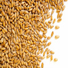 Cheap Price Indian Milling Wheat