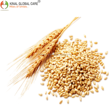 Indian Wheat For Human Consumption