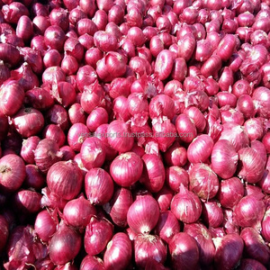 Red Onions from India