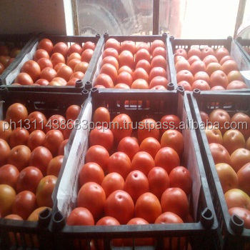 We sell RED FRESH TOMATOES IN BULK FOR SUPPLY BEST for sale