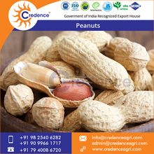 High-Quality Delicious Raw Peanuts Prices from Wholesale Supplier
