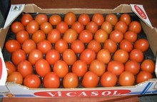 Top Grade Fresh Red Farm Harvested Tomatoes Best Export quality