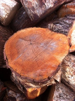 Hot sale- high quality Dry Firewood with reasonable price and fast delivery !!