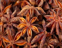AUTUMN STAR ANISEED FROM VIETNAM ORIGIN