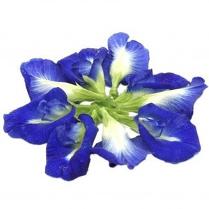 Dried butterfly pea ORGANIC 100% natural Product of Thailand ORGANIC