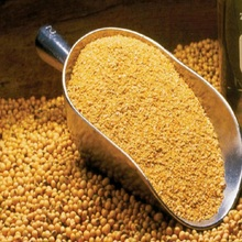 Soybean Protein Corn Gluten Meal Animal Feed,Corn Gluten Meal / Animal feed