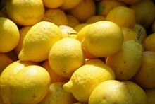 citrus fruits fresh lemon wholesale