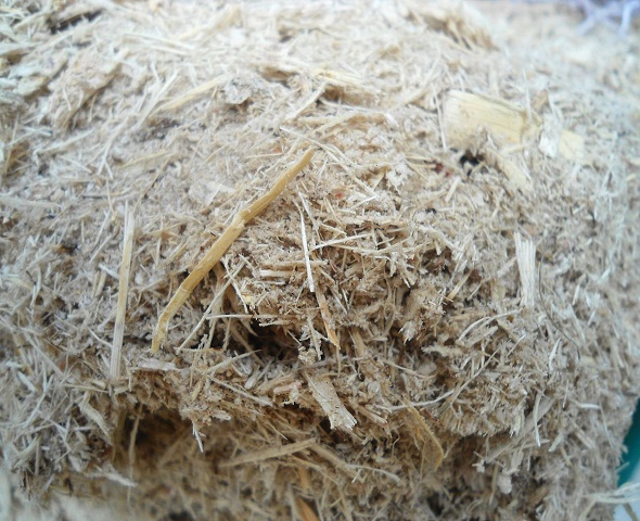 SUGARCANE BAGASSE BEST QUALITY -ANIMAL FEED