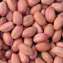 long wholesale raw peanuts price importers peanuts in middle east
