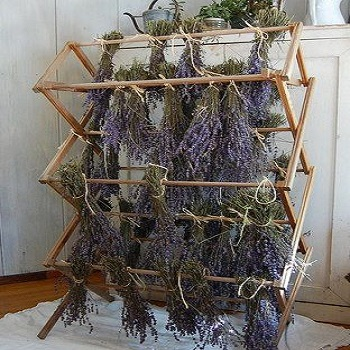 Hot Sale High Quality Pure Lavender Seeds