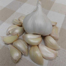 High Quality Fresh Normal White Garlic Purple Garlic Red Garlic Available in Stock Now.