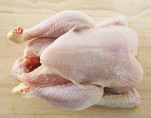 HALAL FROZEN WHOLE CHICKEN READY FOR EXPORT