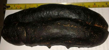 dried sea cucumber available for sale