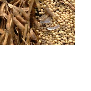 soya bean for oil , soybean , Soybean Seeds,soyabeans meal for sale