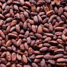 Wholesale Healthy Raw Cacao/ Cocoa Beans Available of the Highest Quality