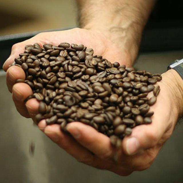 Coffee Seeds, Fresh And Dried Coffee Seeds Arabica Robusta