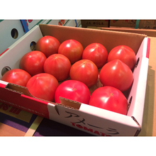 Very sweet and popular wholesale tomatoes with best price