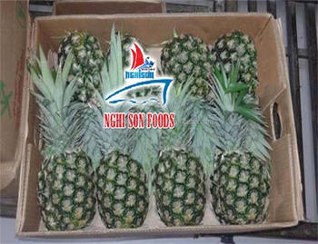 FRESH PINEAPPLE HIGH QUALITY FROM VIETNAM