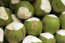 Fresh Young Coconut for sale