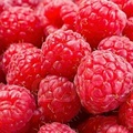 sweet fresh raspberries for sale at good price