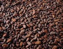 Grade A Cocoa/ Cacao/ Chocolate bean / Dried cacao Beans