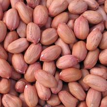 Peanut / Groundnuts /Peanut in Shell/White and Red Peanut /Raw and Roasted Peanuts