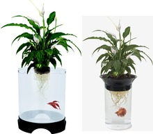 Penn-Plax Aquaponic Betta Fish Tank Promotes Healthy Environment for Plants and Fish