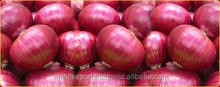 holland onions