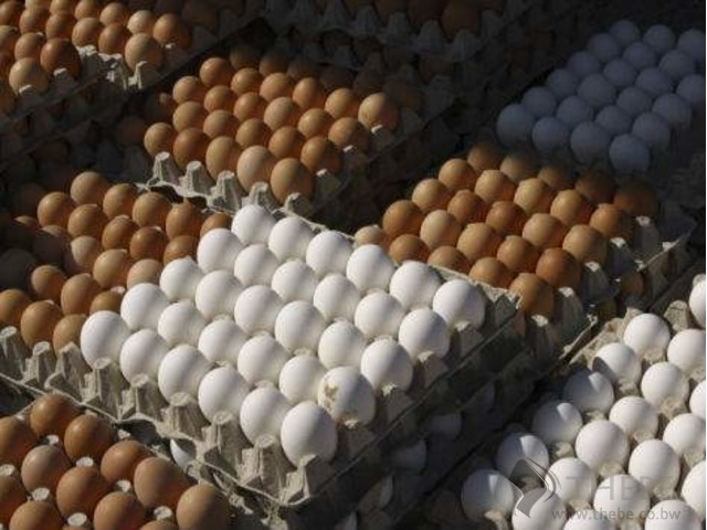 Fresh Table Chicken Eggs (White and Brown)