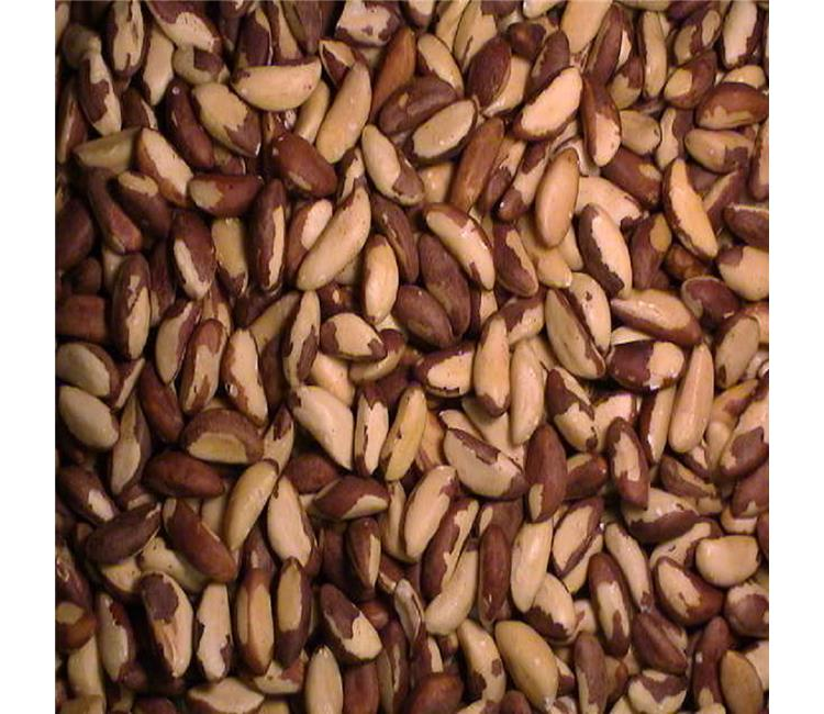 Organic and Conventional Brazil Nuts Raw Sizes Brazil Nuts Top Quality for sale Brazil nuts contain