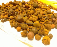 Best prices Dried Cow Ox Gallstones best offer